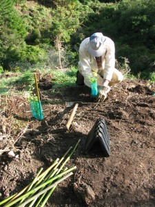 Planting in Wills Gully.