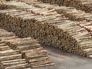 Logs await to be loaded for export at Picton.